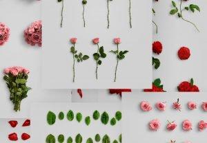 flower ed vol1 objects