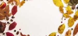 autumn slider bg