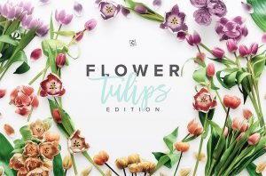 flower tulips edition cover