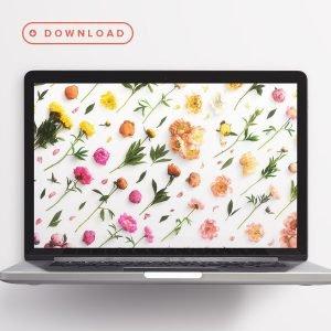 free wallpaper peonies computer