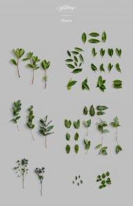 plants wedding collection customscene