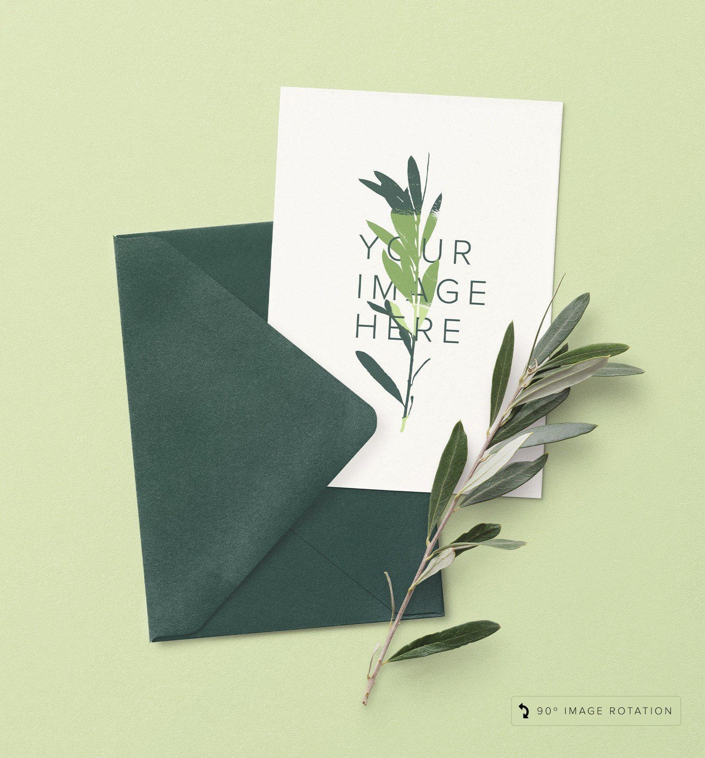5x7in card w envelope and olive tree branch image04