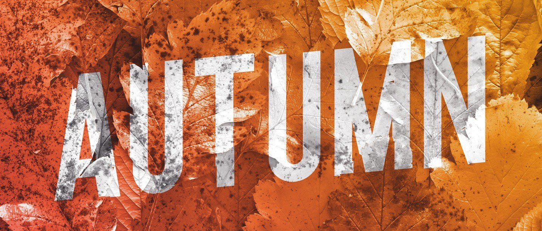 autumn background mockup image04