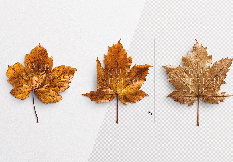 autumn leaf mockup image03