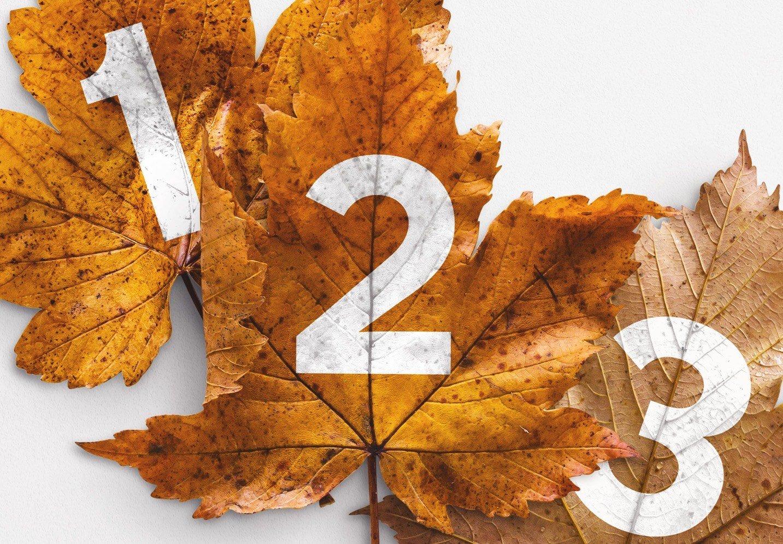 autumn leaf mockup image04