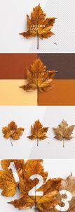 autumn leaf mockup preview1 1 scaled