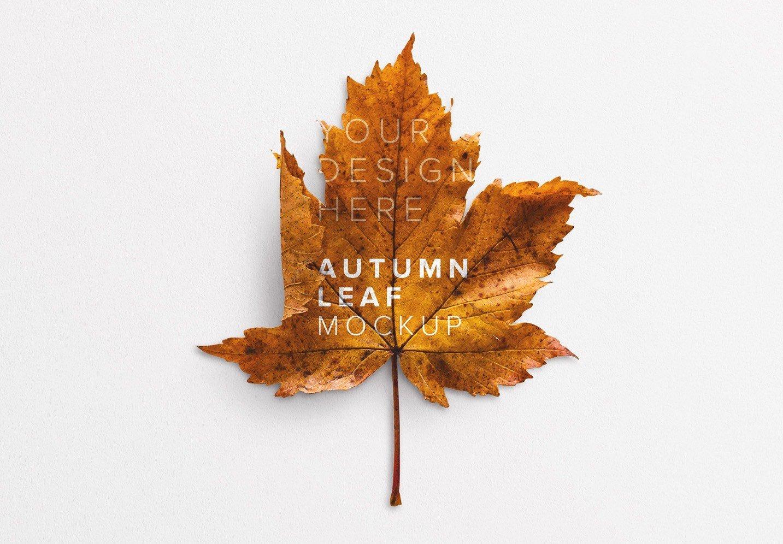 autumn leaf mockup thumbnail