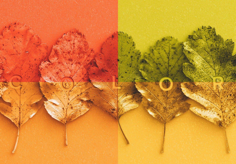 autumn leaves mockup image02