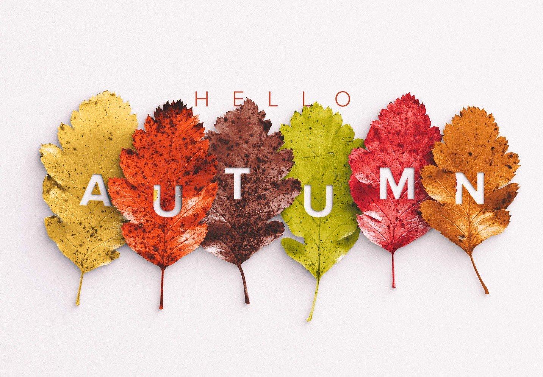 autumn leaves mockup image04
