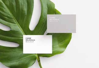 business card monstera plant thumbnail 1