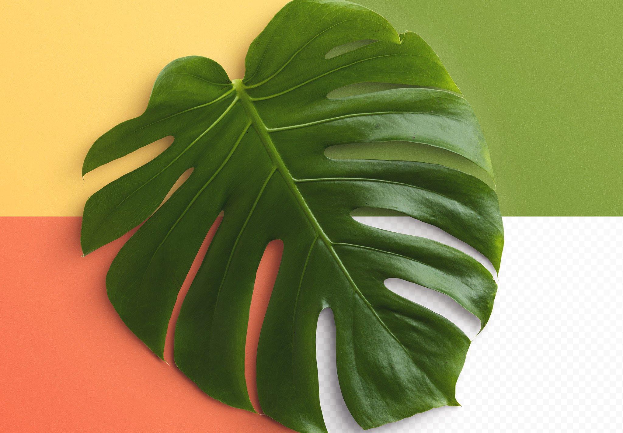 monstera plant frame mockup image02