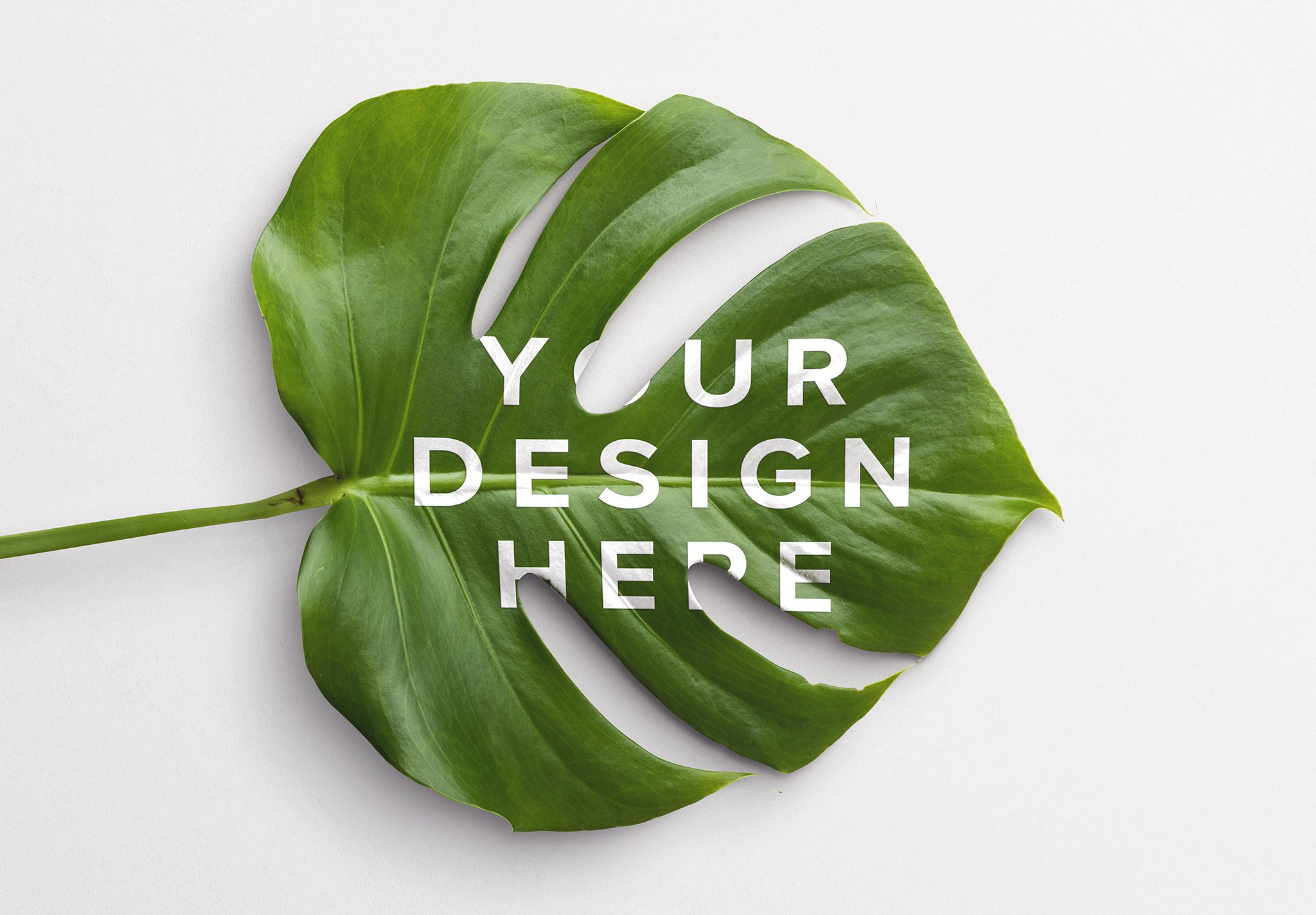 Monstera Leaf Plant Mockup Thumbnail