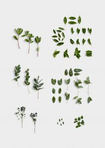 Wedding Plants Item Scene Creator