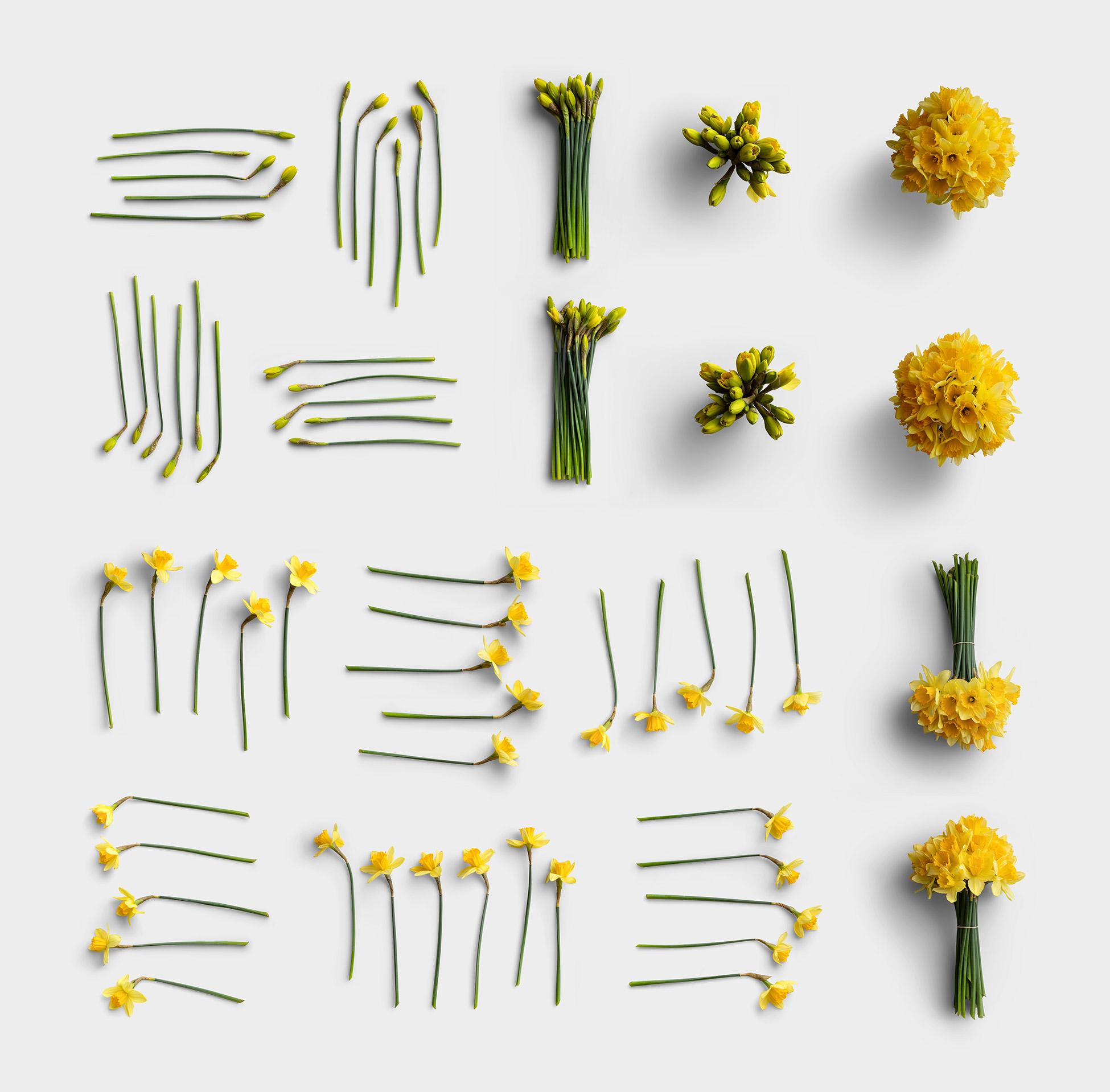 Daffodils Item Scene Creator