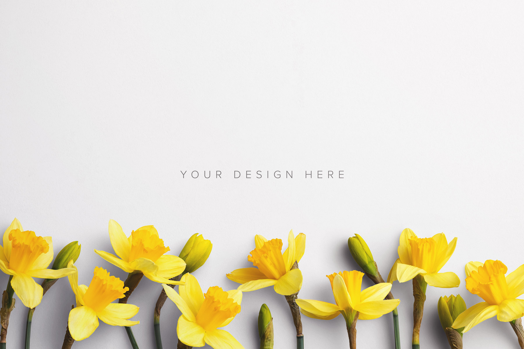 daffodils custom scene creator mockup 2