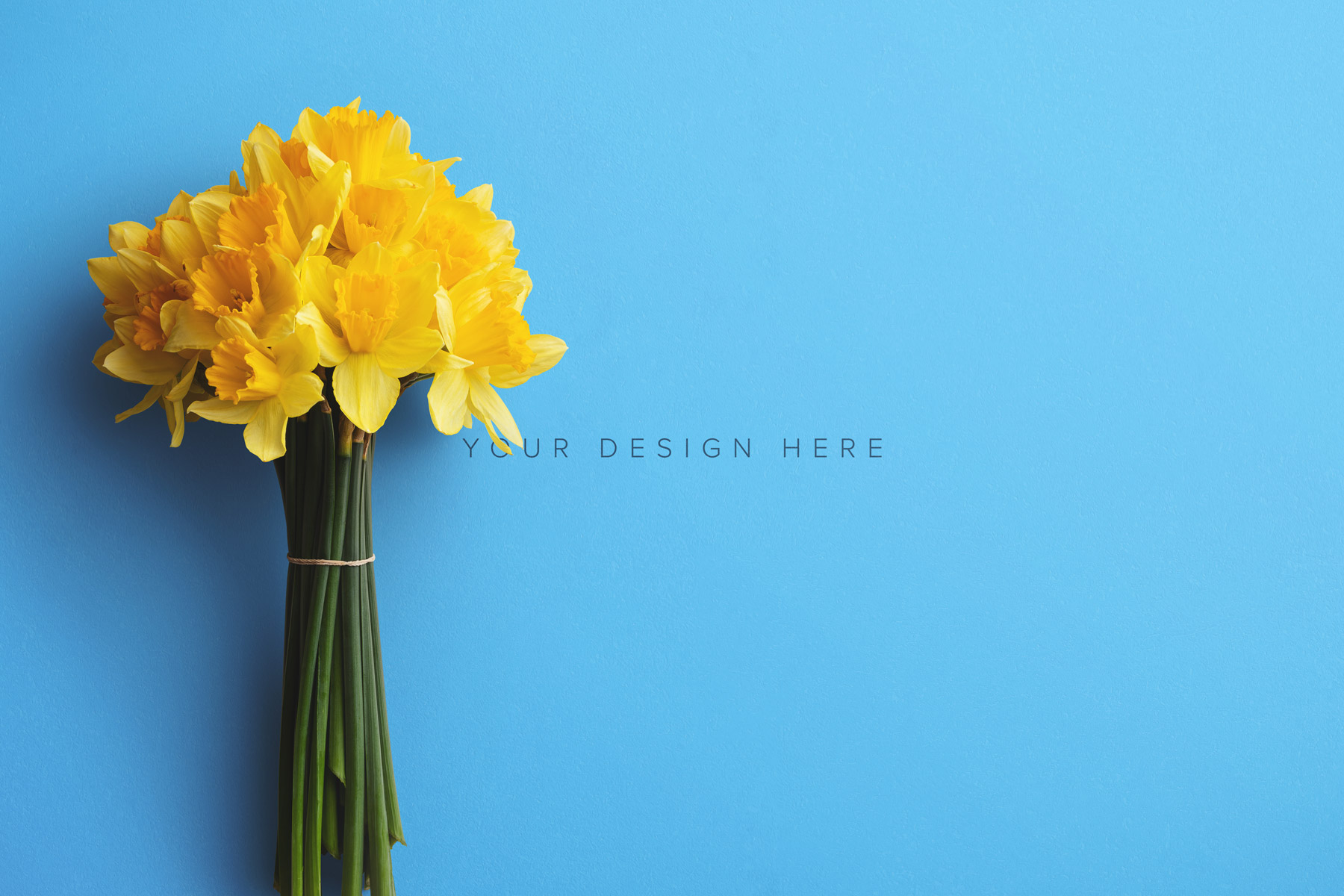 daffodils custom scene creator mockup 3