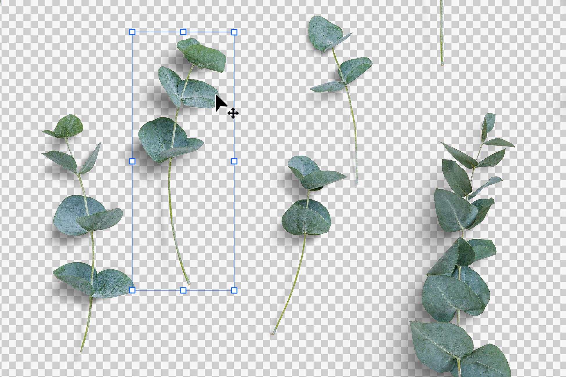 Eucaliptus Isolated Objects