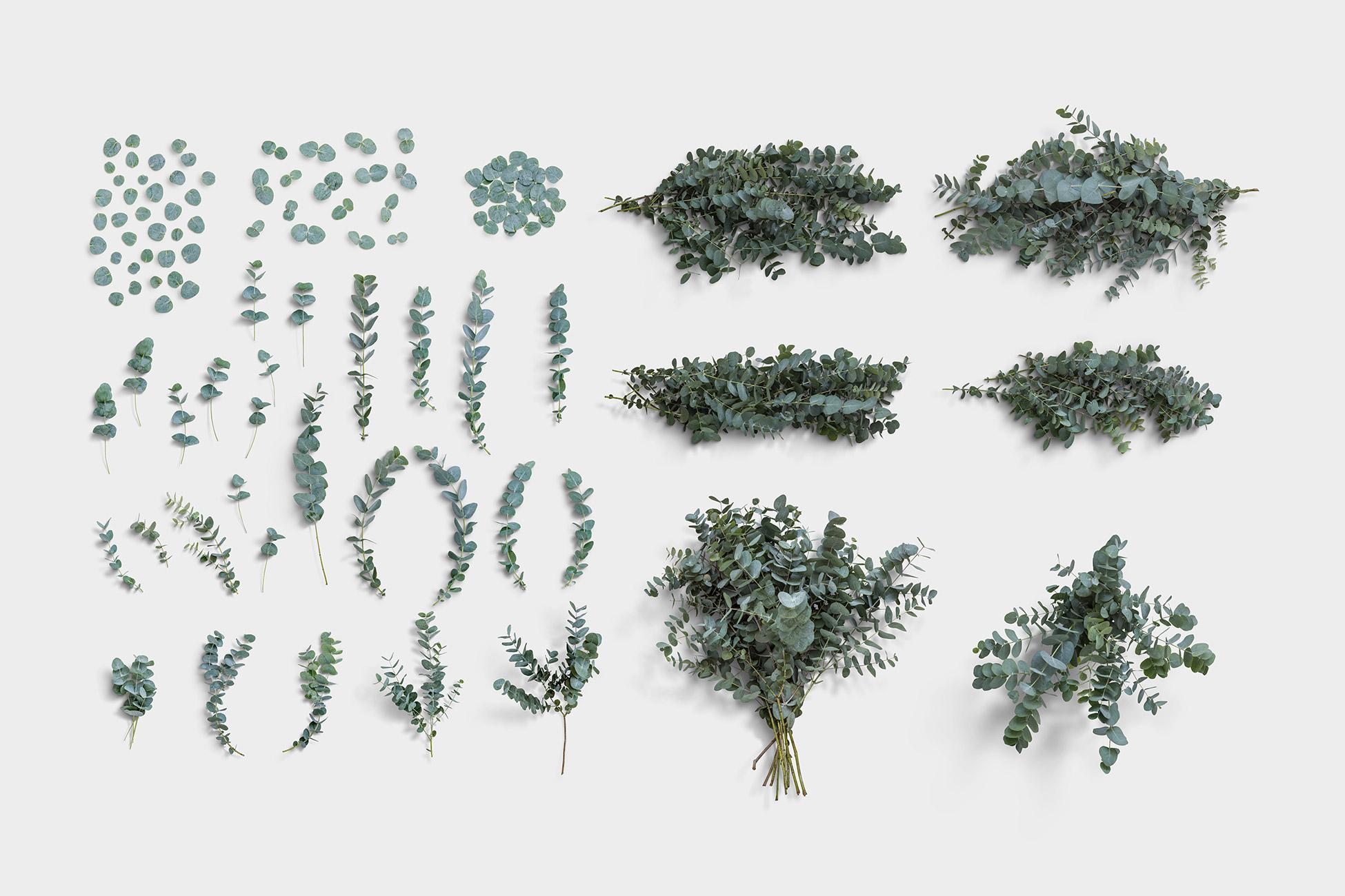 Eucaliptus Item Scene Creator