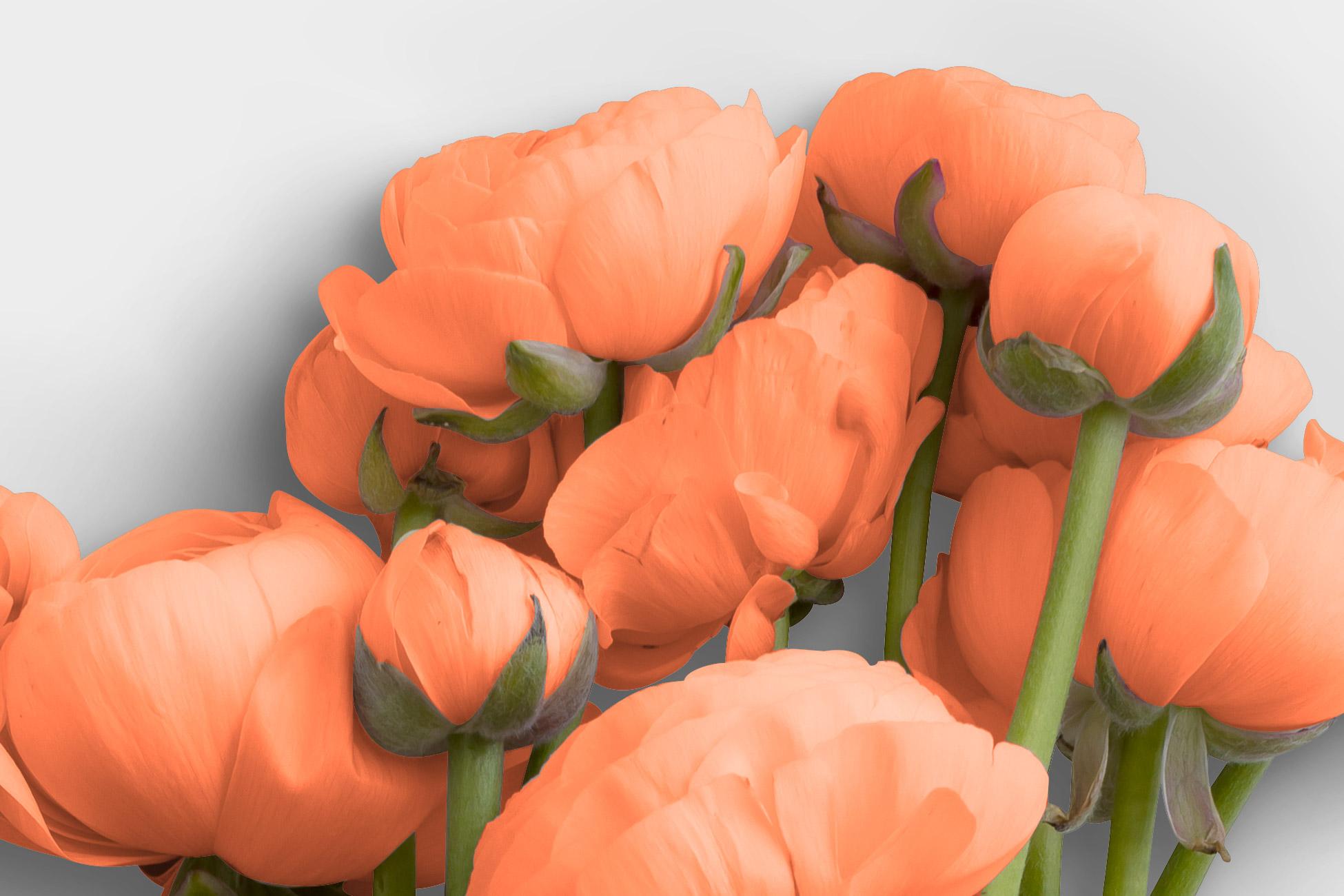 Ranunculus Flower High Resolution