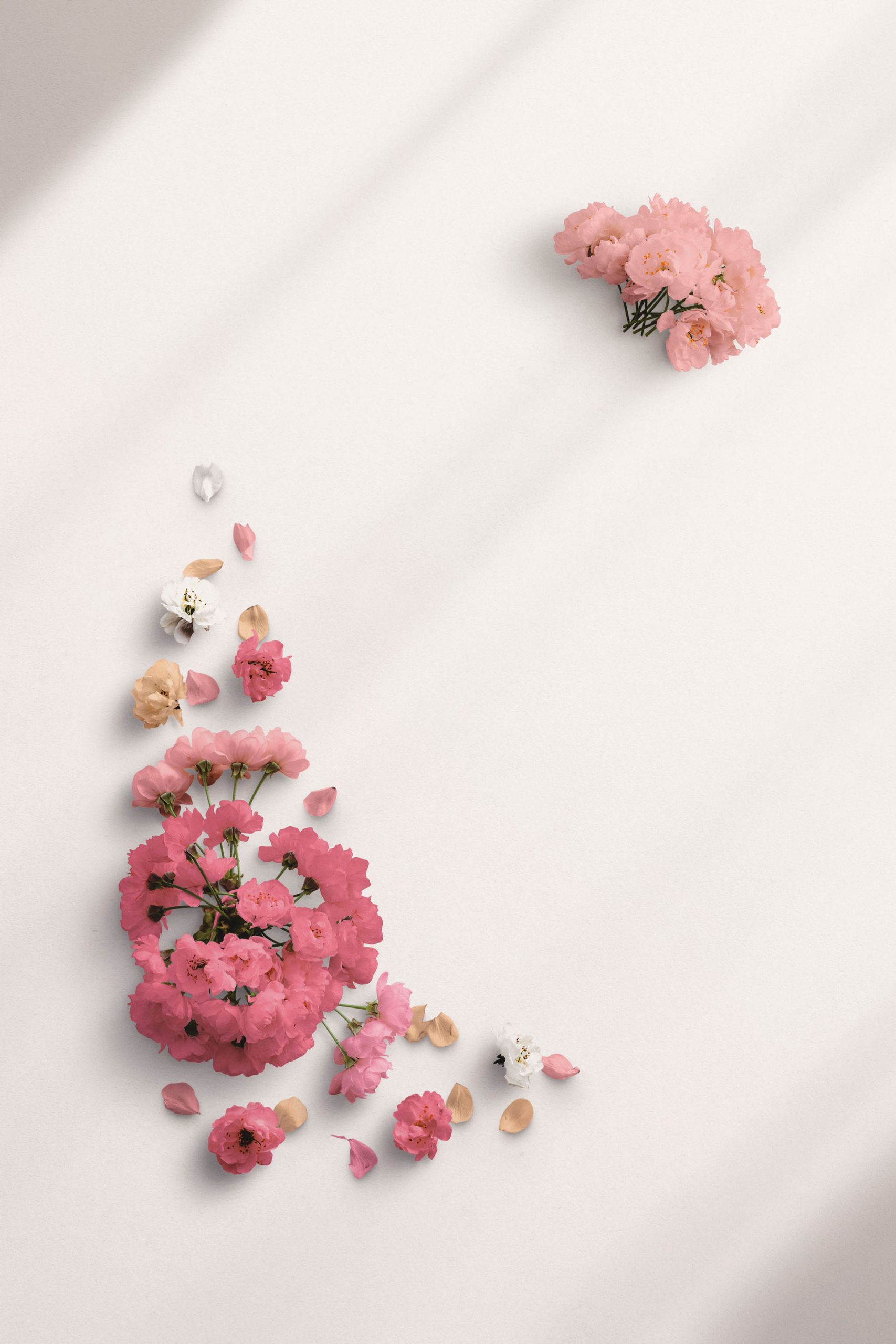Cherry Blossom Custom Scene Creator Template 4 Thumbnail