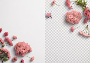 Cherry Blossoms Custom Scene Creator Template 3 Image01