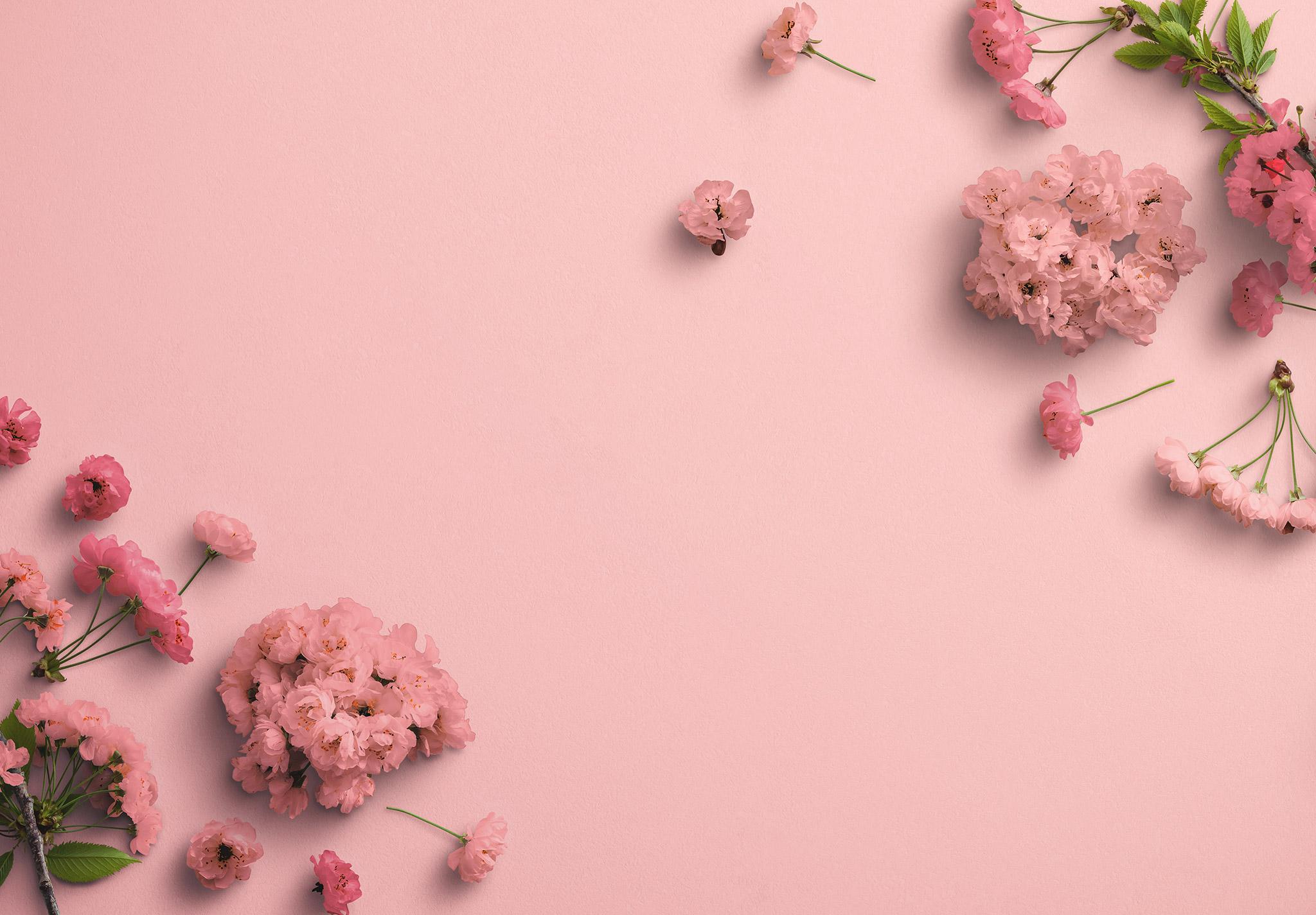 Cherry Blossoms Custom Scene Creator Template 3 Image03