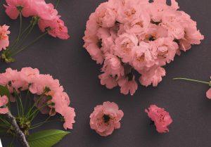 Cherry Blossoms Custom Scene Creator Template 3 Image04