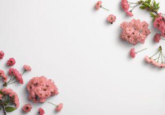 Cherry Blossoms Custom Scene Creator Template 3 Thumbnail