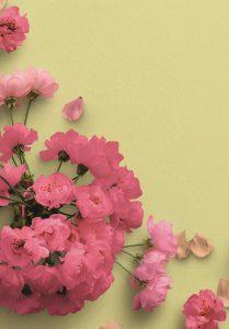 Cherry Blossoms Custom Scene Creator Template 4 Image04