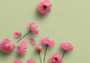 Cherry Blossoms Custom Scene Creator Template 5 Image04
