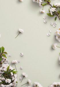 Cherry Blossoms Custom Scene Creator Template 6 Image03