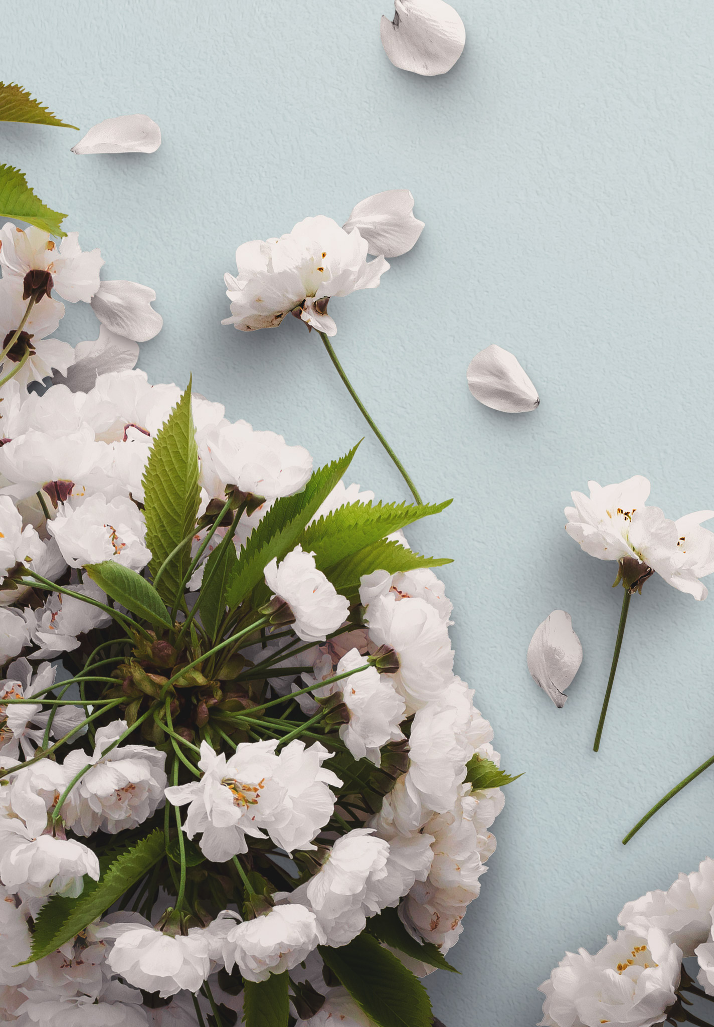 Cherry Blossoms Custom Scene Creator Template 6 Image04