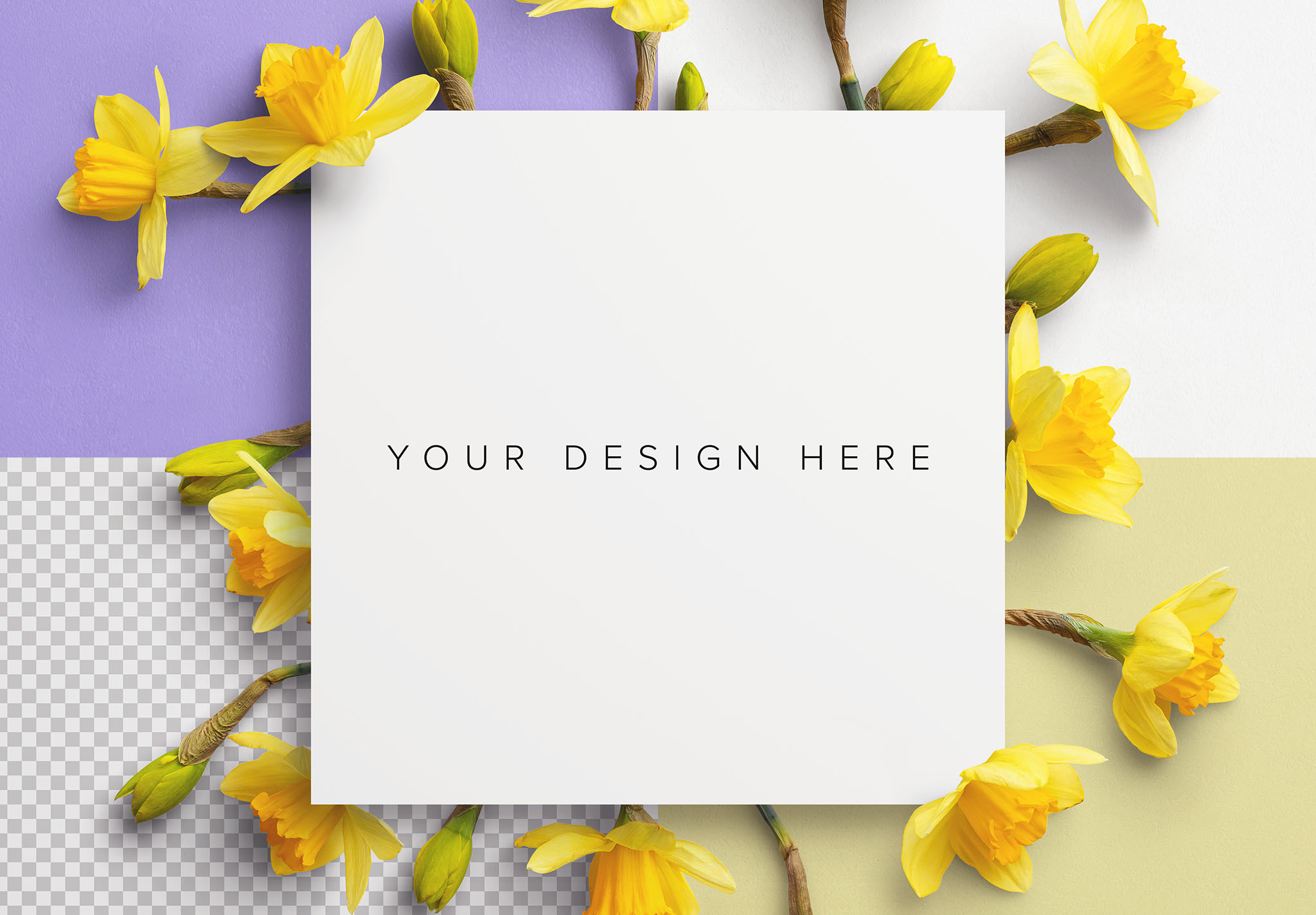 Daffodils Custom Scene Creator Template 10 Image02