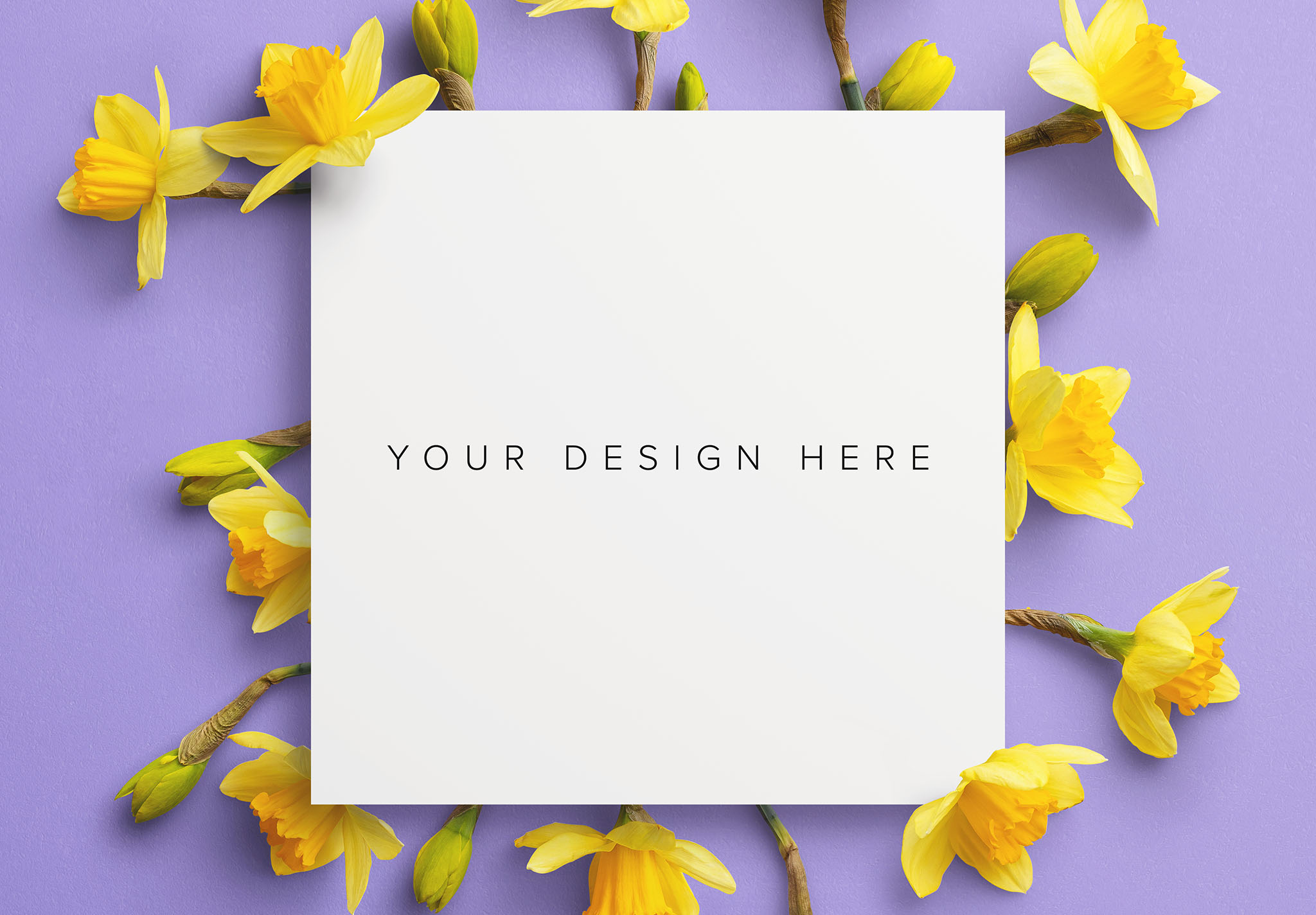 Daffodils Custom Scene Creator Template 10 Image03