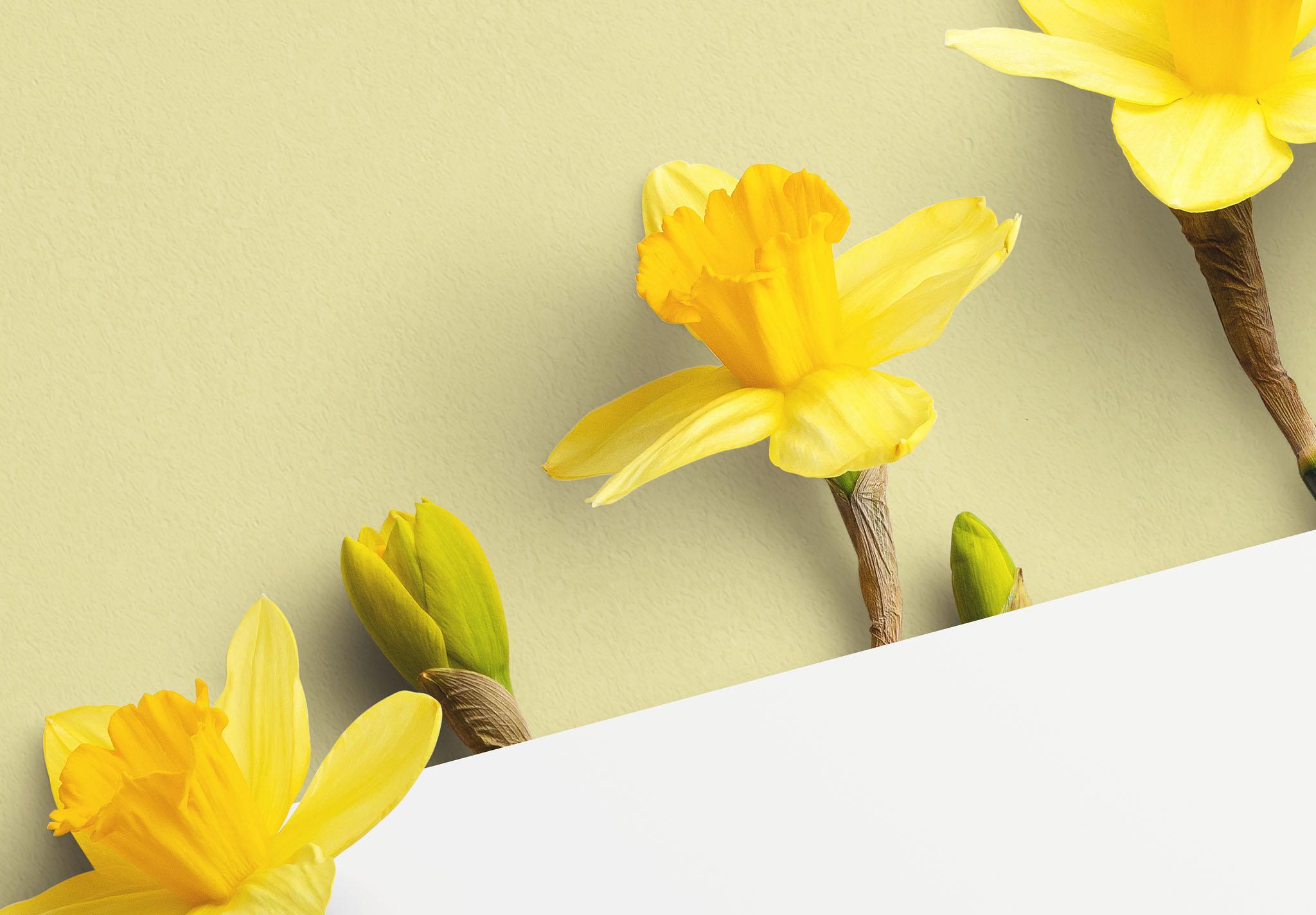 Daffodils Custom Scene Creator Template 10 Image04