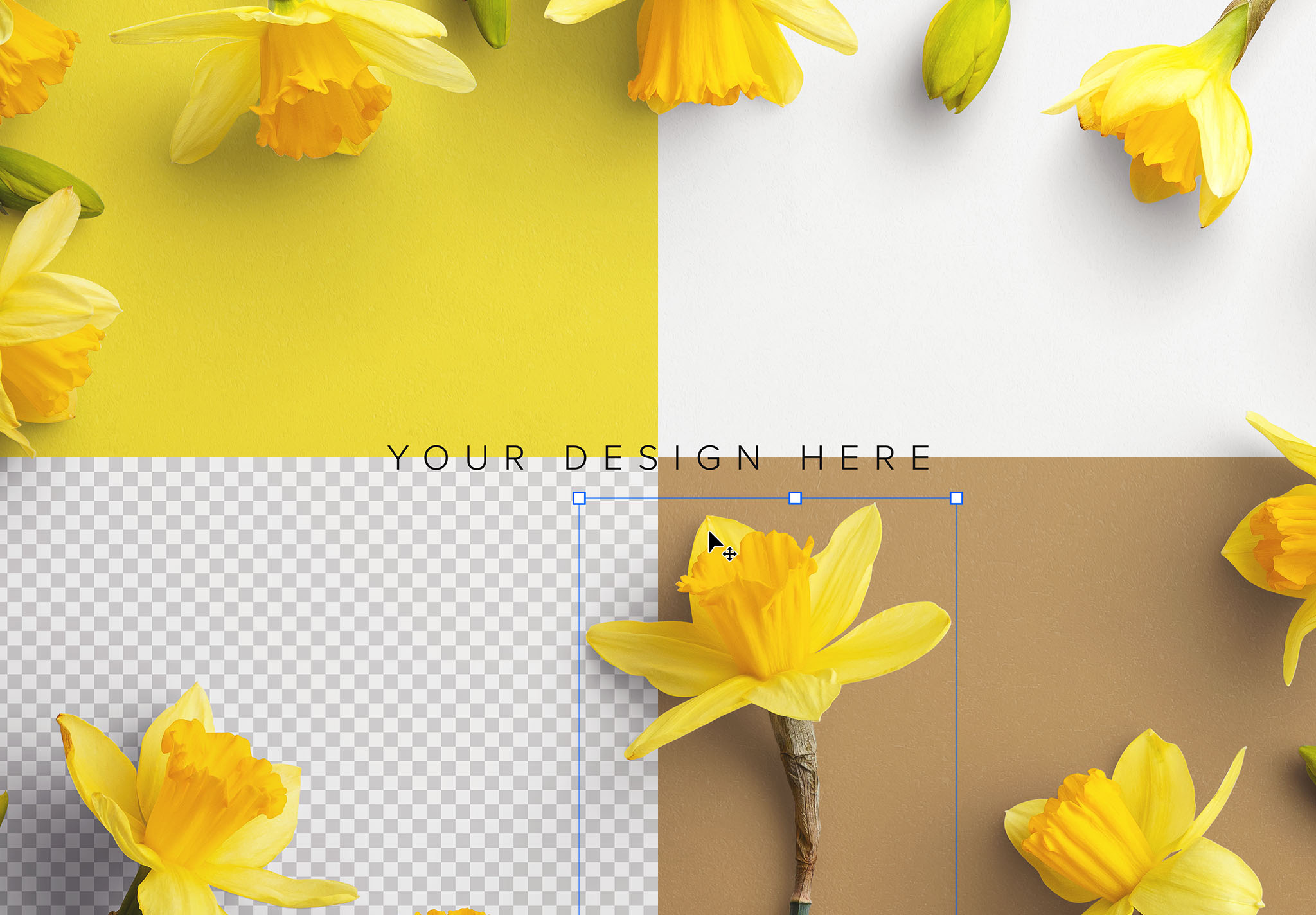 Daffodils Custom Scene Creator Template 1 Image02