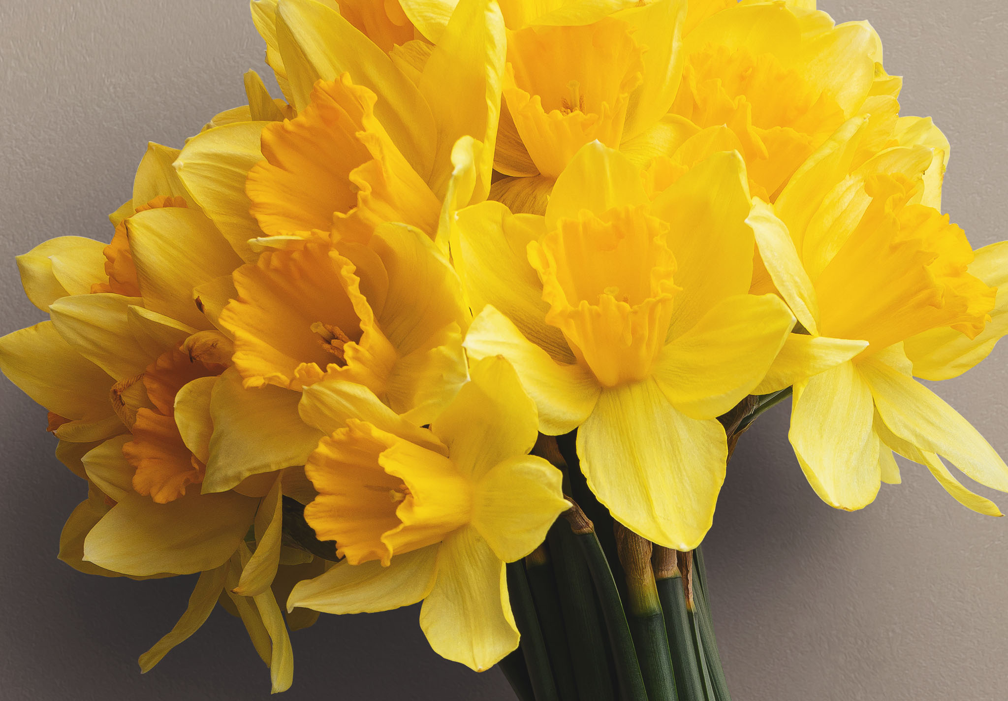 Daffodils Custom Scene Creator Template 3 Image04