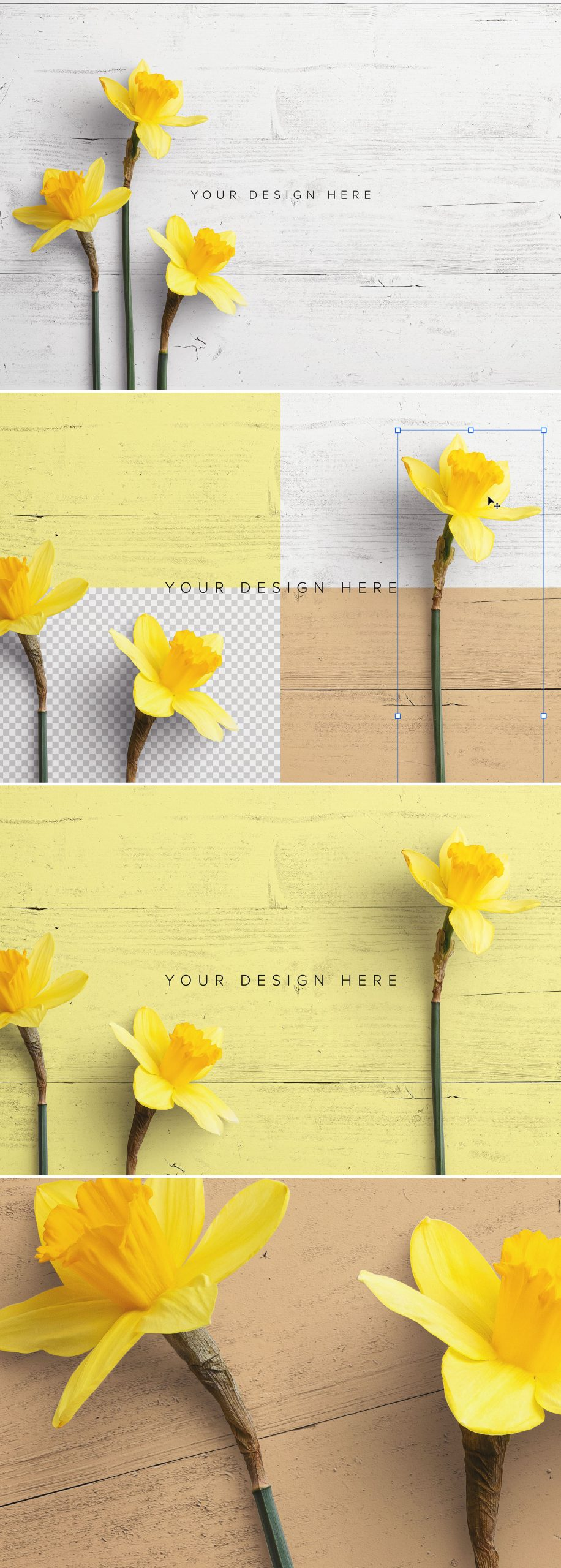 Daffodils Custom Scene Creator Template 4Preview1