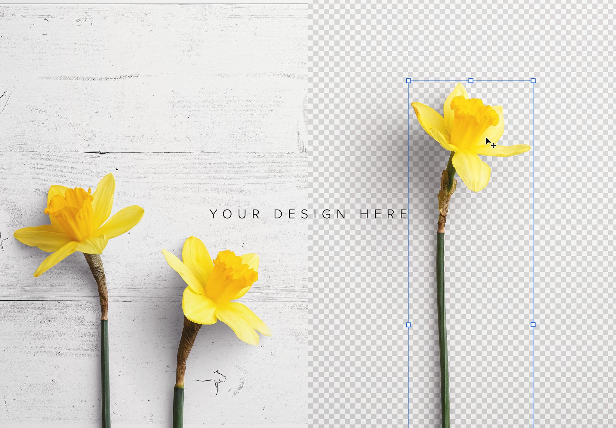 Daffodils Custom Scene Creator Template 4 Image01