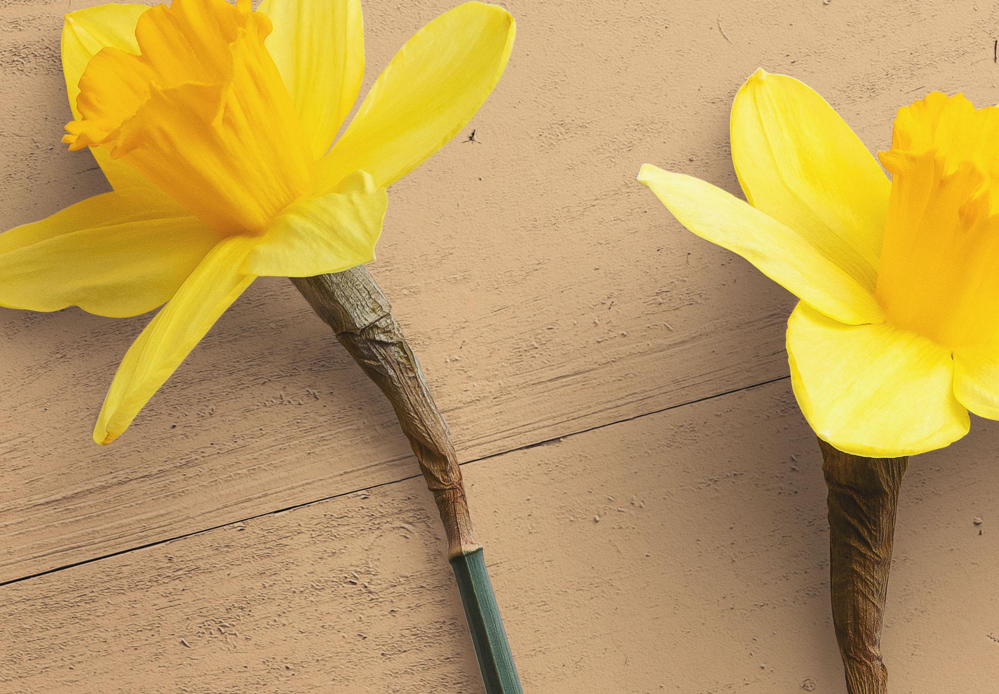 Daffodils Custom Scene Creator Template 4 Image04