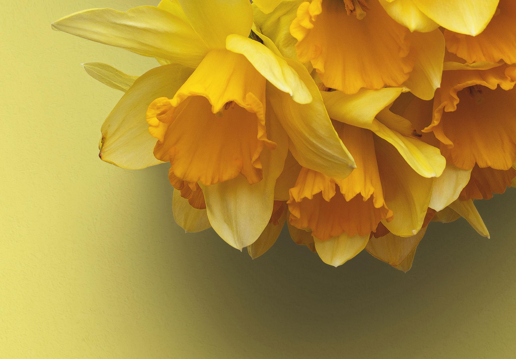 Daffodils Custom Scene Creator Template 5 Image04