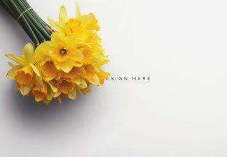 Daffodils Custom Scene Creator Template 5 Thumbnail
