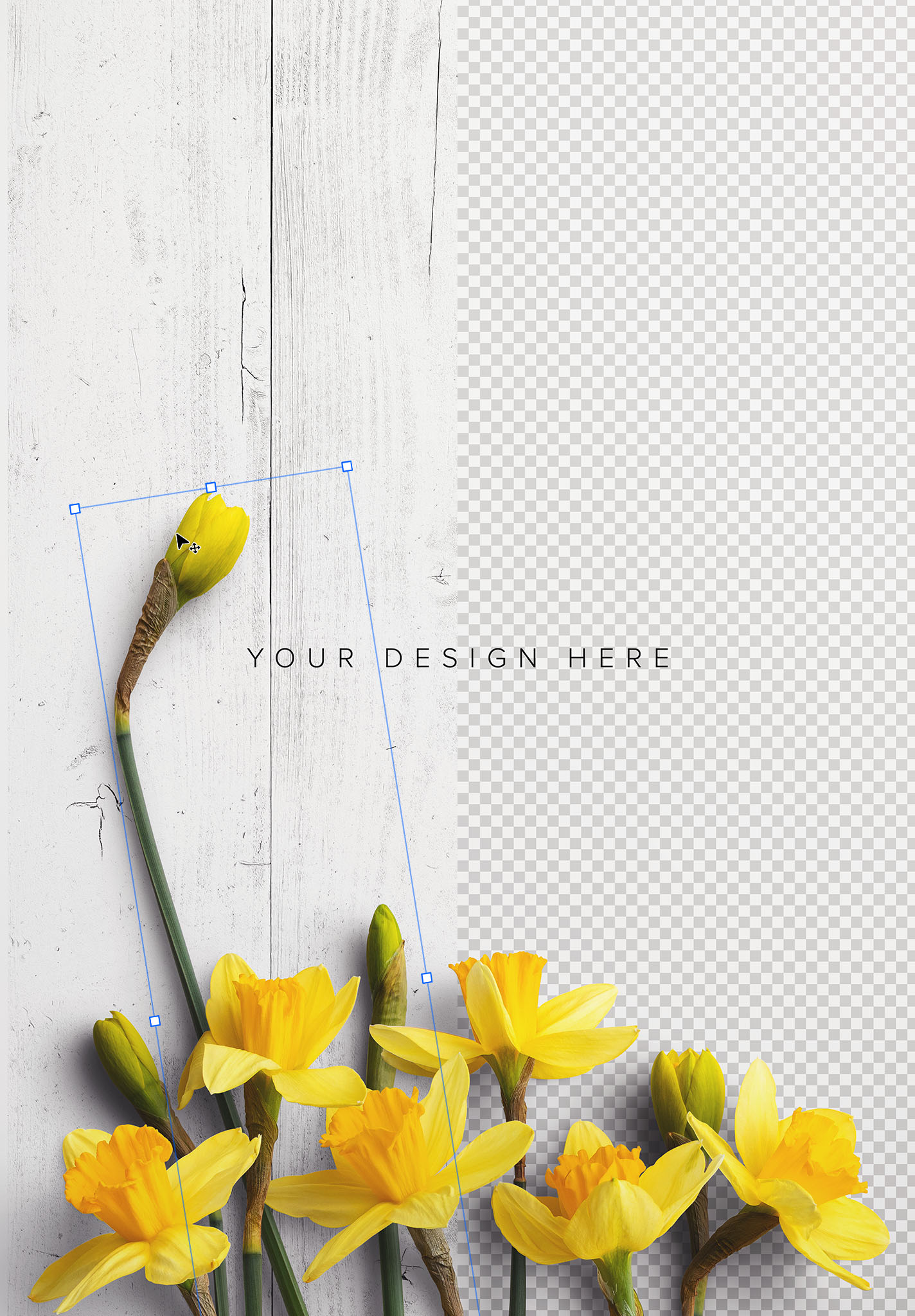 Daffodils Custom Scene Creator Template 6 Image01