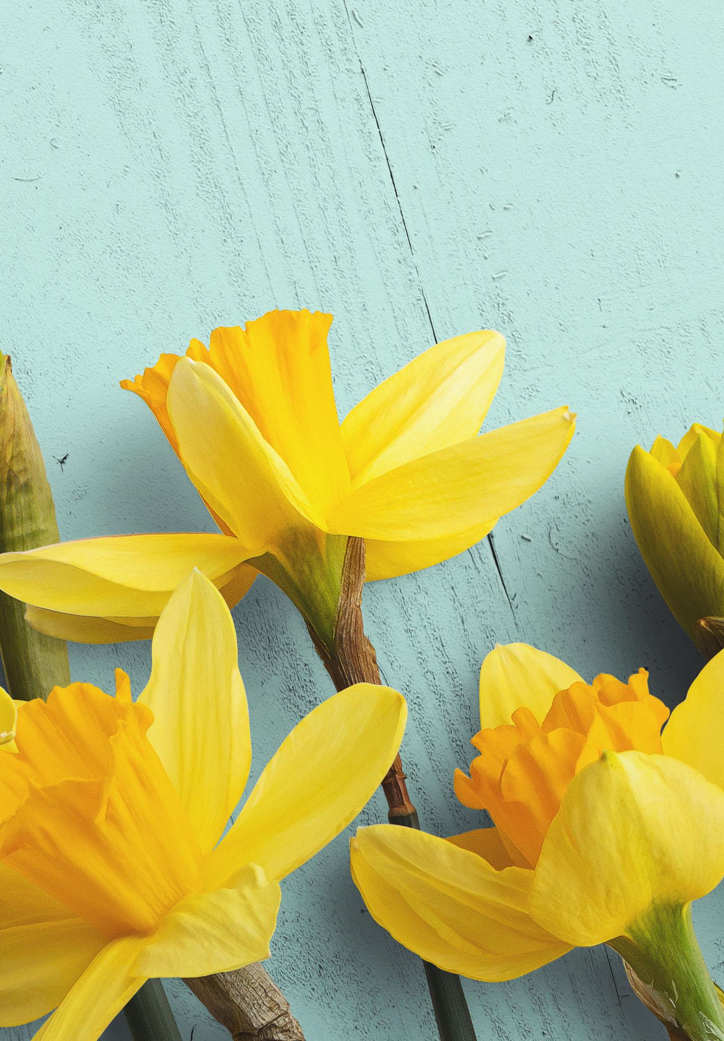 Daffodils Custom Scene Creator Template 6 Image04