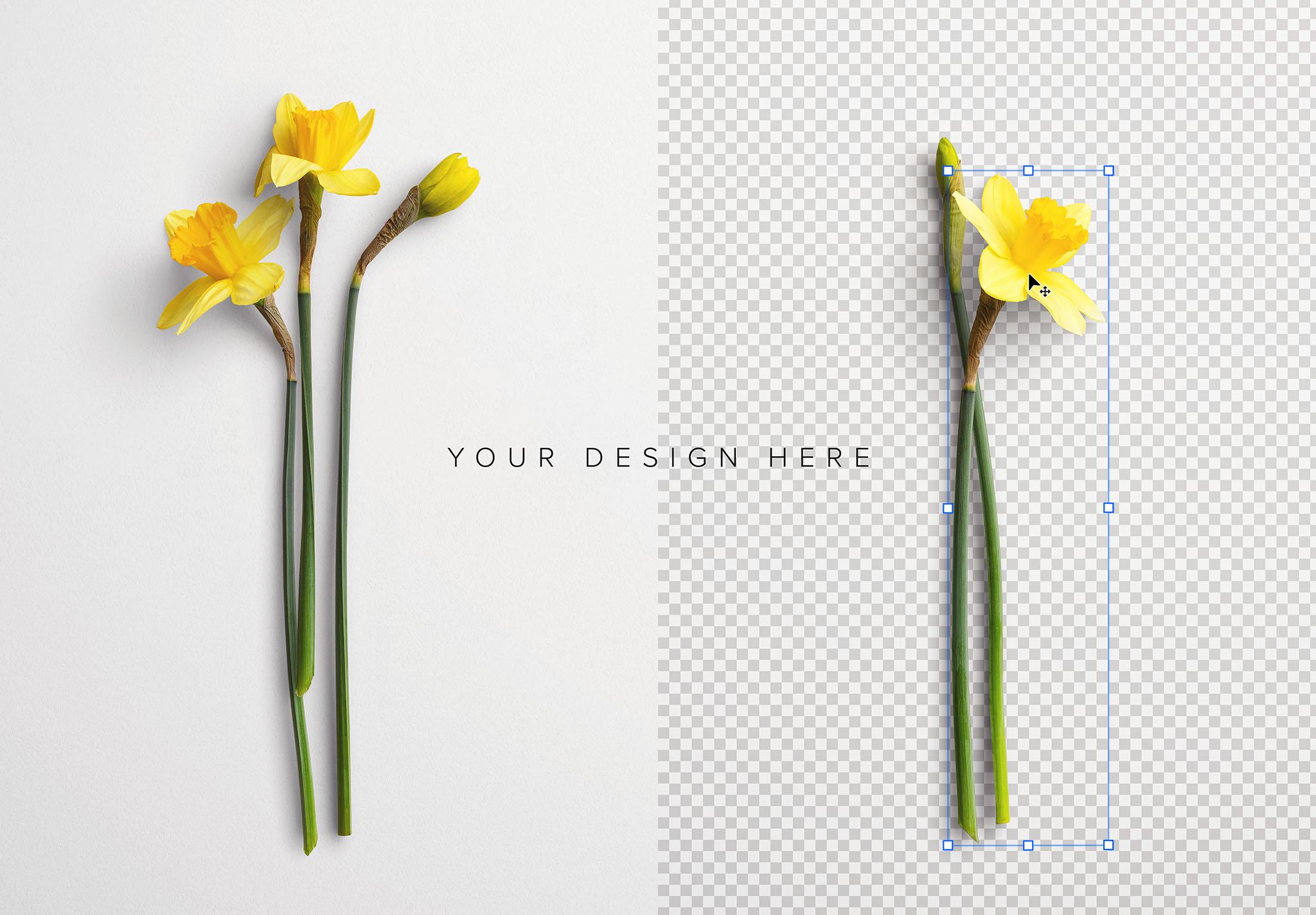 Daffodils Custom Scene Creator Template 7 Image01