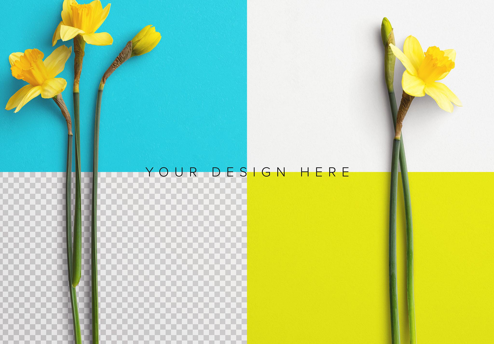 Daffodils Custom Scene Creator Template 7 Image02