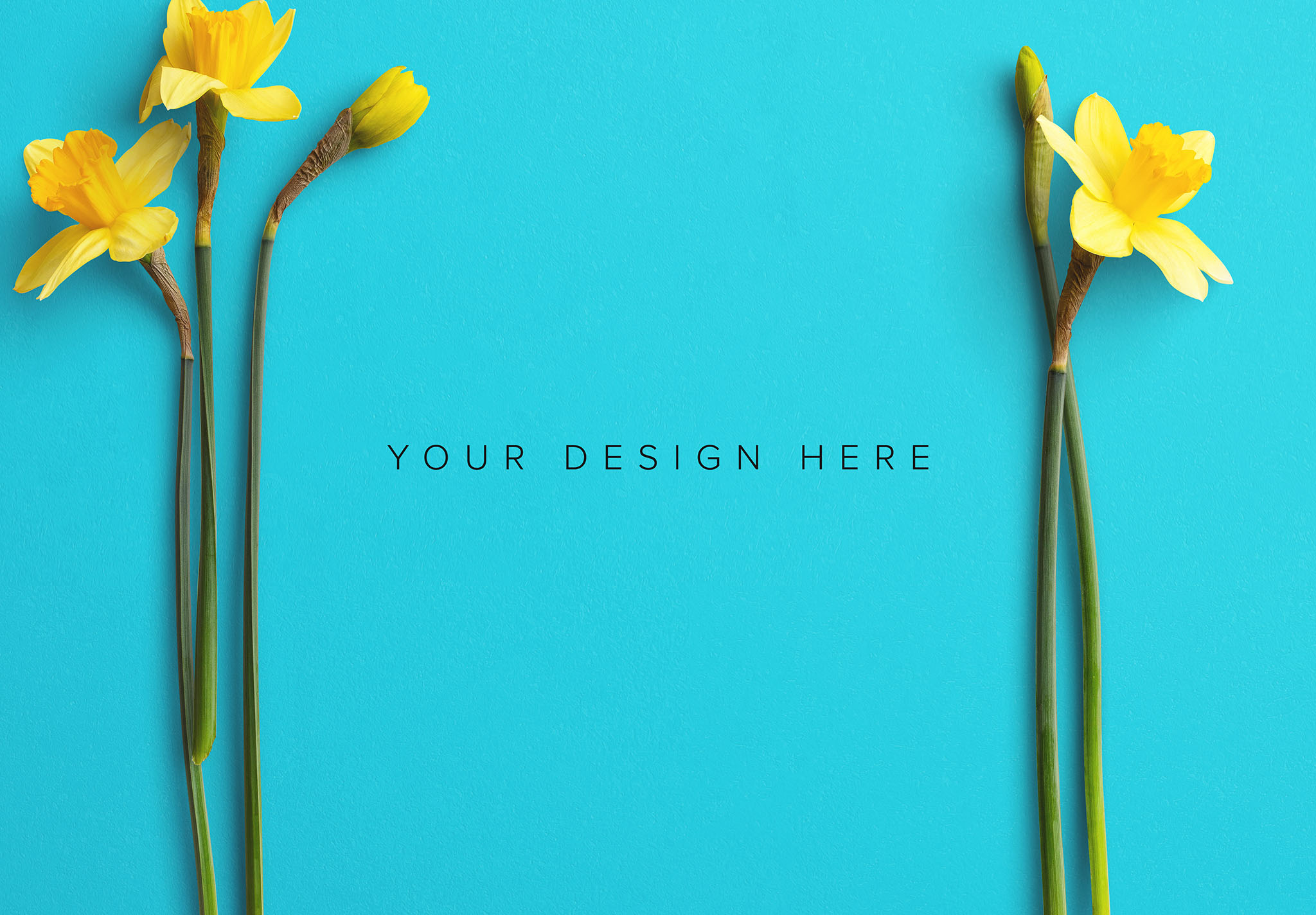 Daffodils Custom Scene Creator Template 7 Image03