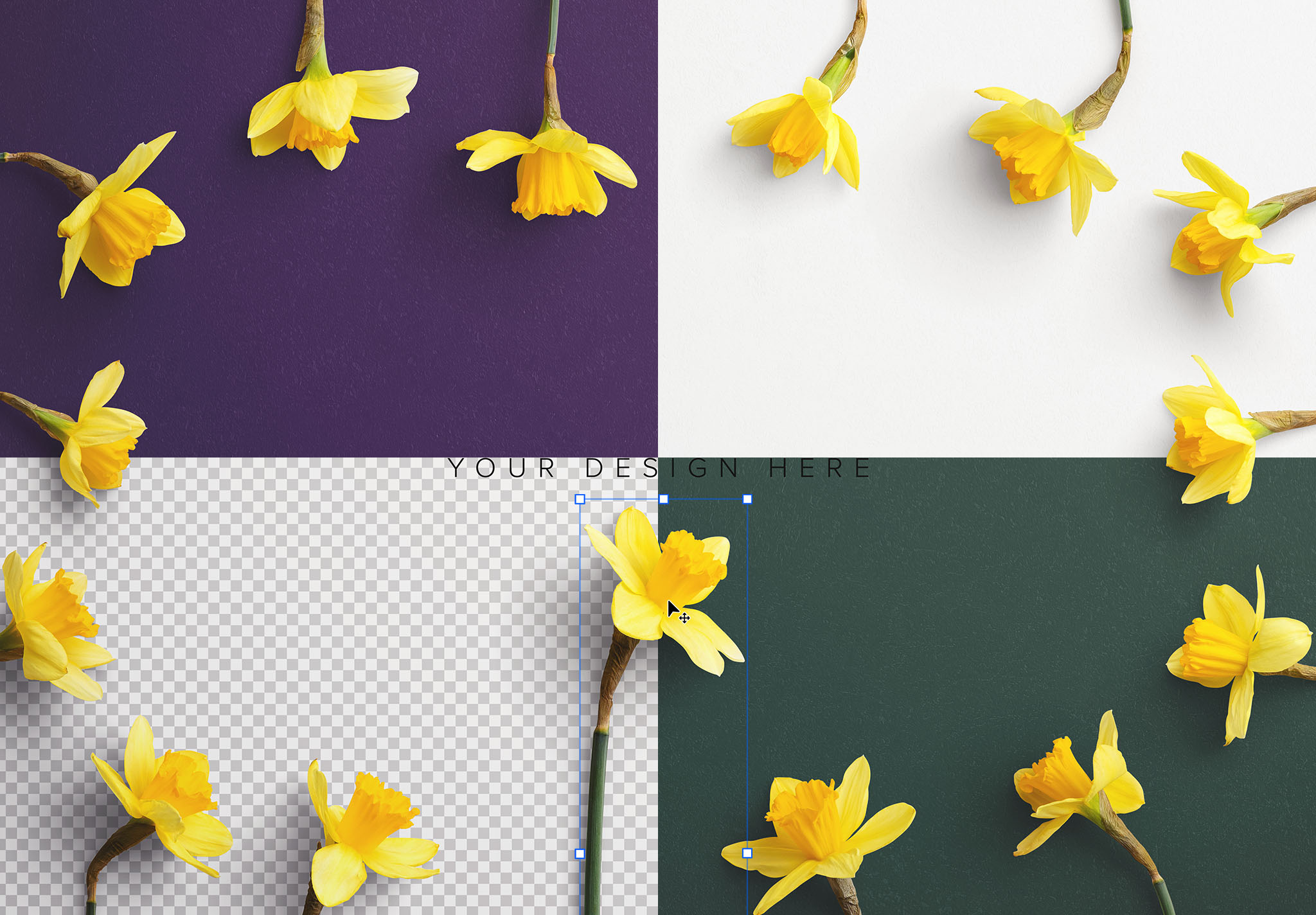 Daffodils Custom Scene Creator Template 8 Image02