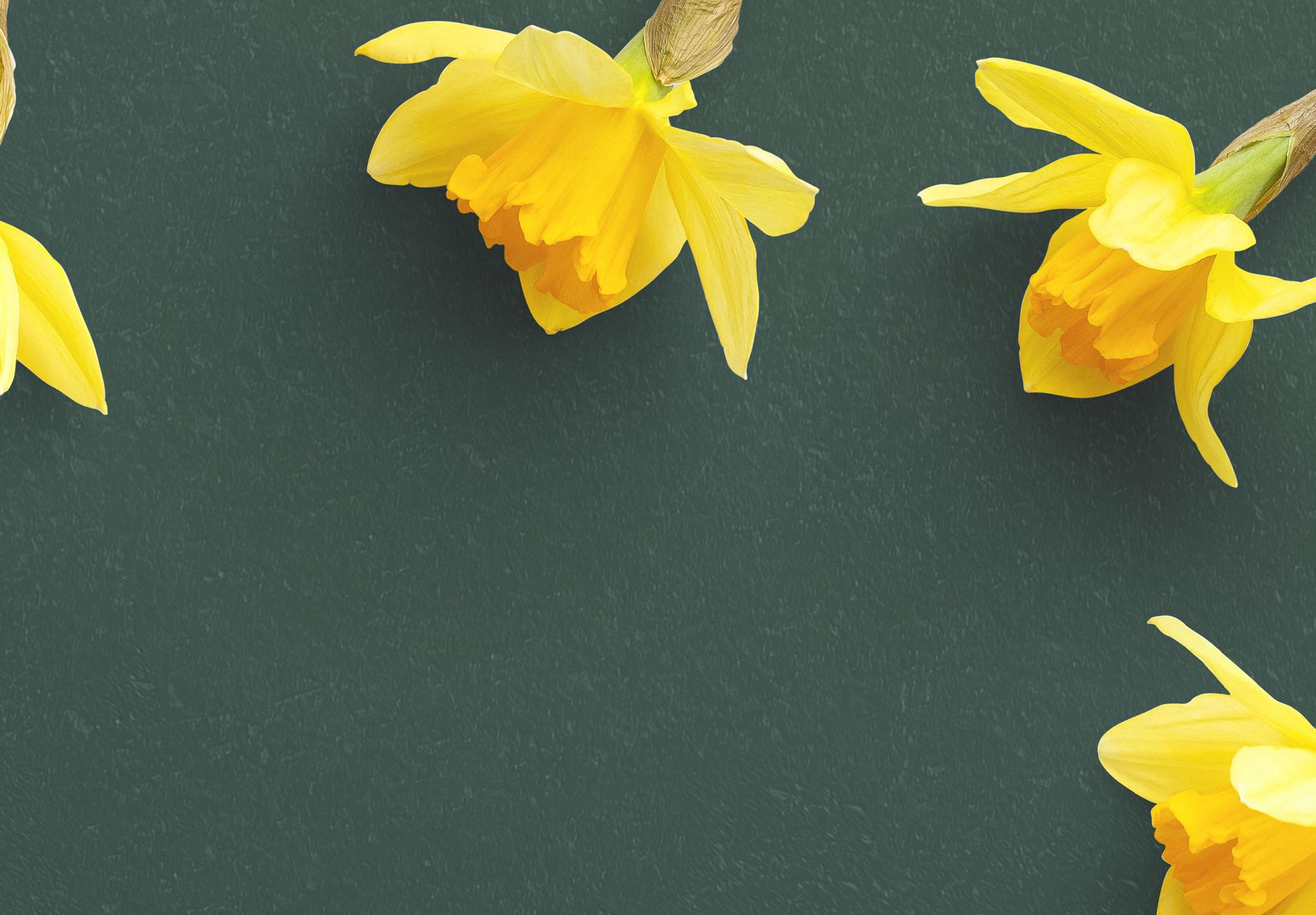 Daffodils Custom Scene Creator Template 8 Image04