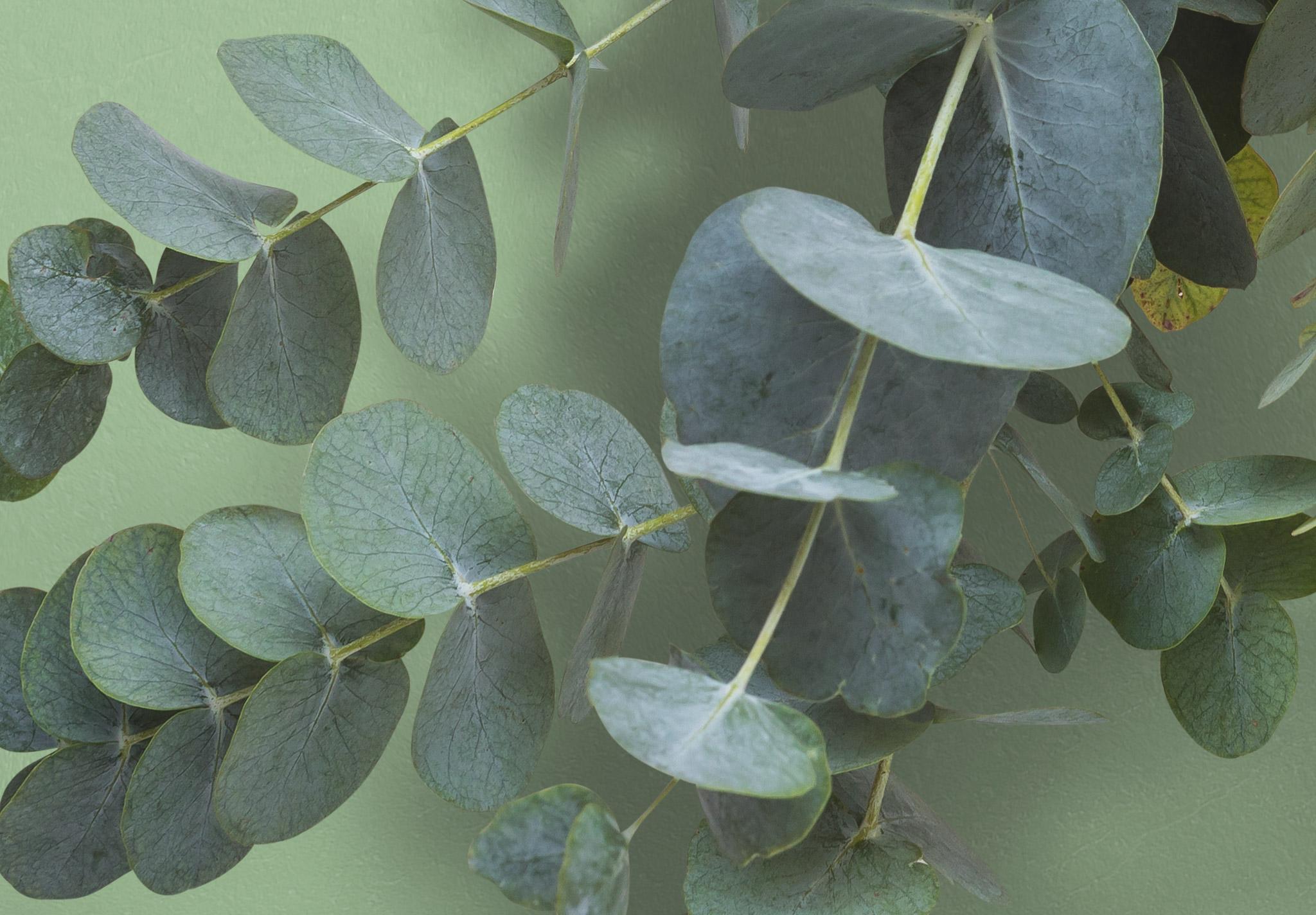 Eucalyptus Custom Scene Creator Template 3 Image04